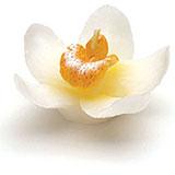 mini-bougie-orchidee-mariage